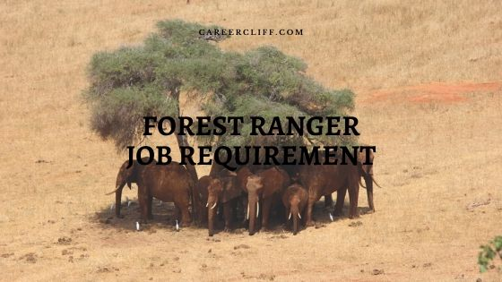 forest ranger job requirements